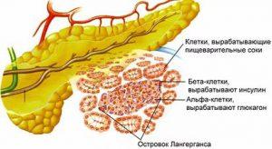 Как вырабатывается инсулин в организме?