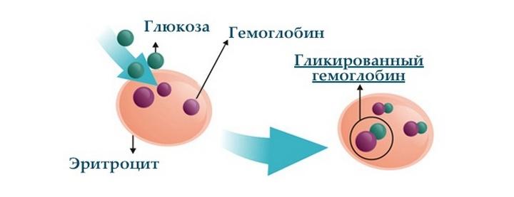 Гликированный гемоглобин как сдавать натощак или нет